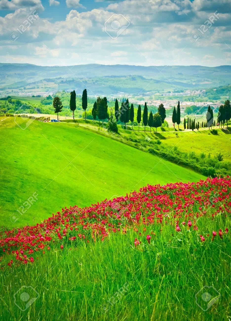 Hill covered by red flowers overlooking a road lined by cypresses on a sunny day near Certaldo, Tuscany, Italy Standard-Bild - 18910349