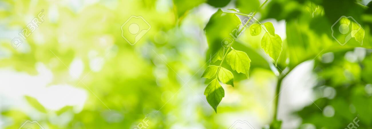 Close up of nature view green leaf on blurred greenery background under sunlight with bokeh and copy space using as background natural plants landscape, ecology cover concept. - 137603773