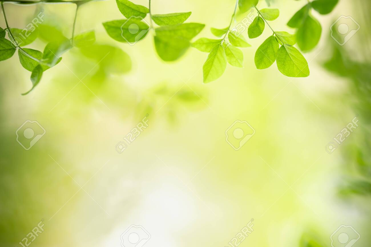 Close up of nature view green leaf on blurred greenery background under sunlight with bokeh and copy space using as background natural plants landscape, ecology wallpaper concept. - 141432507