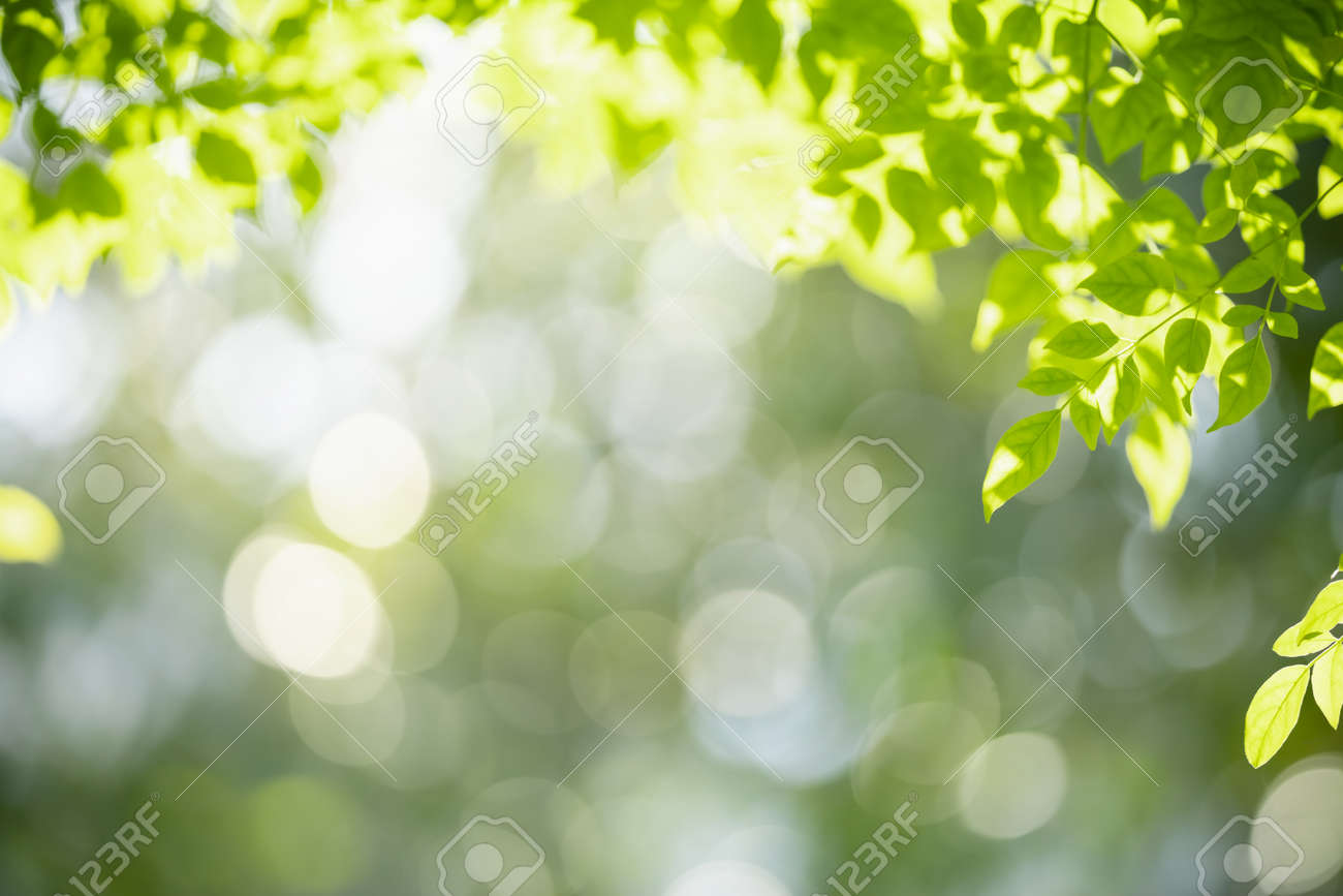 Closeup of nature view of green leaf on blurred greenery background with copy space using as background natural green plants landscape, ecology, fresh wallpaper concept. - 159631984