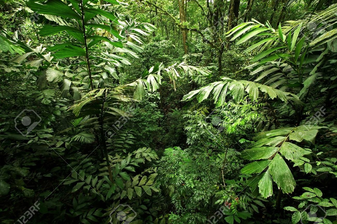 A picture looking into a dense, lush, remote tropical rain forest jungle in Costa Rica Stock Photo - 11613628