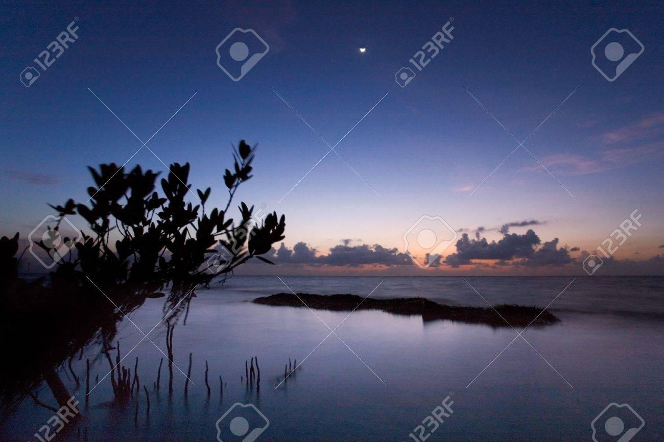 Calmn Tropical De La Salida Del Sol Y El árbol De Silueta De Manglar ...