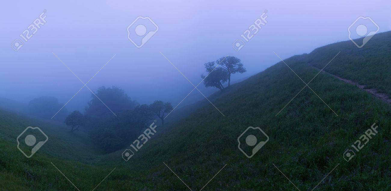 Beautiful trees on field on a foggy evening Stock Photo - 11945386