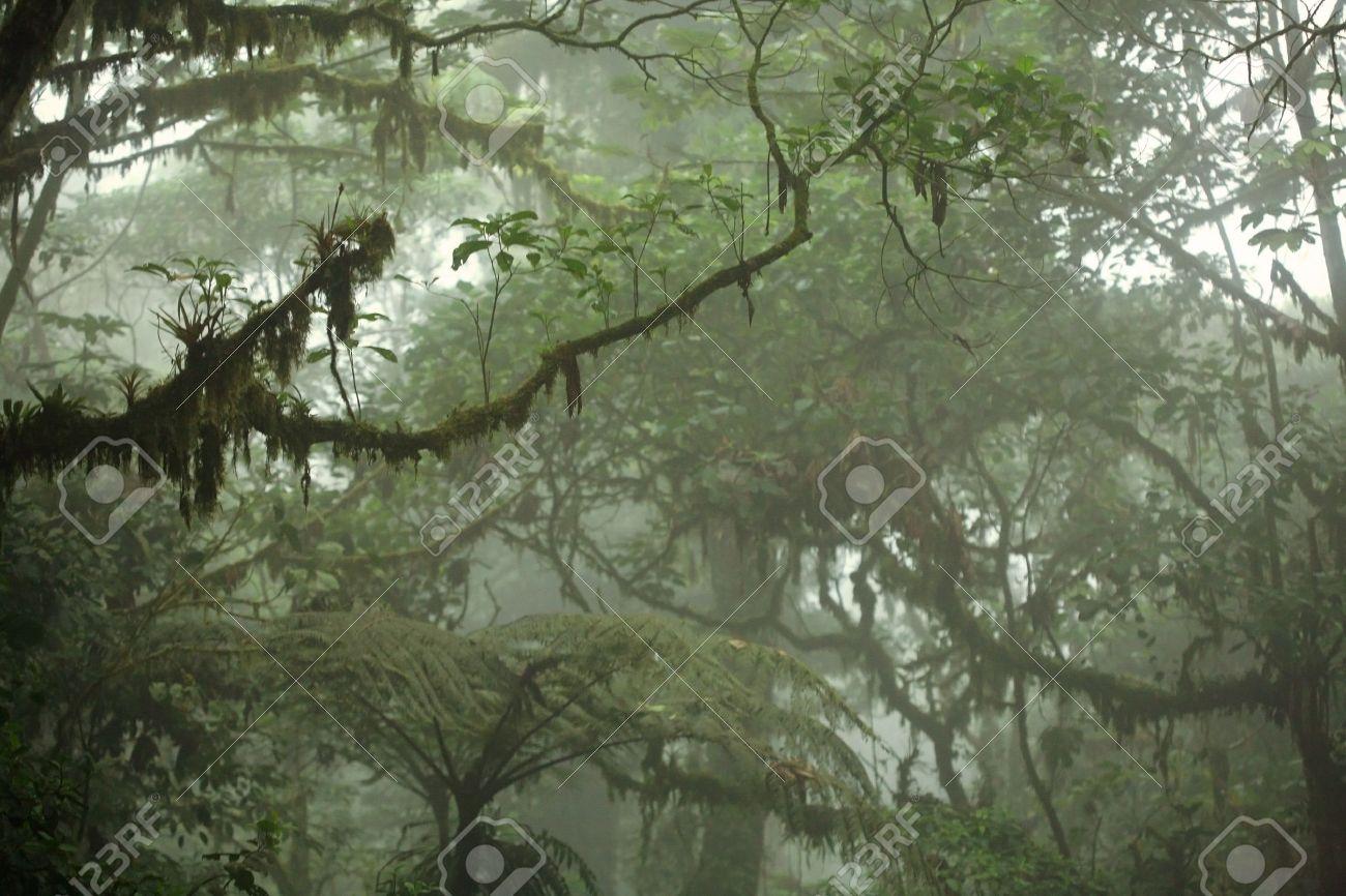 Lush tropical rain forest canopy in Costa Rica Stock Photo - 12661531 & Lush Tropical Rain Forest Canopy In Costa Rica Stock Photo ...