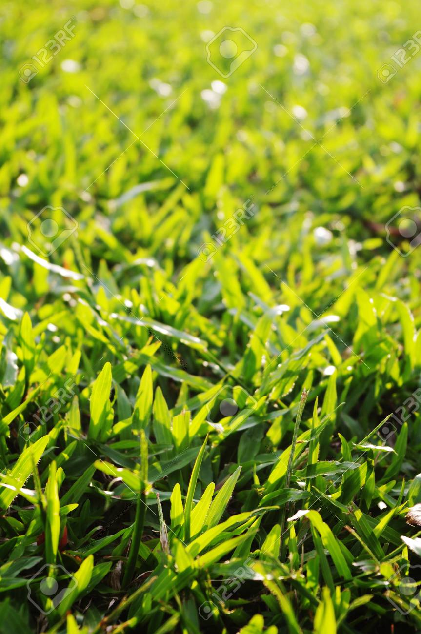 green grass background with sunlight shining through. Stock Photo - 9812824