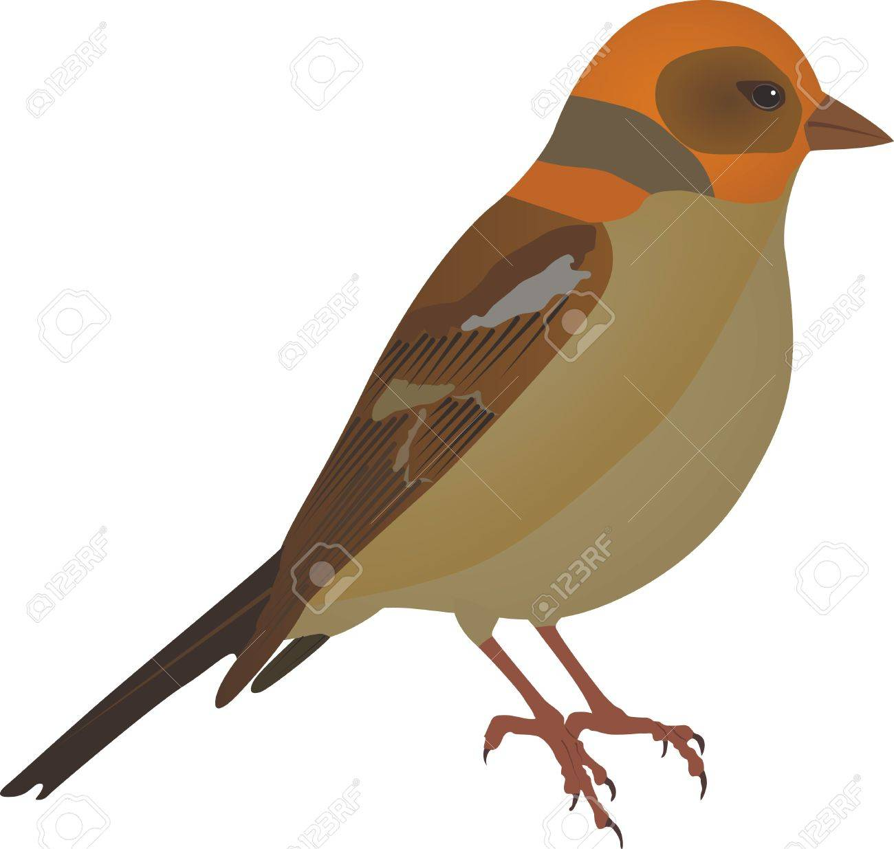 isolated little bird Stock Vector - 11137041