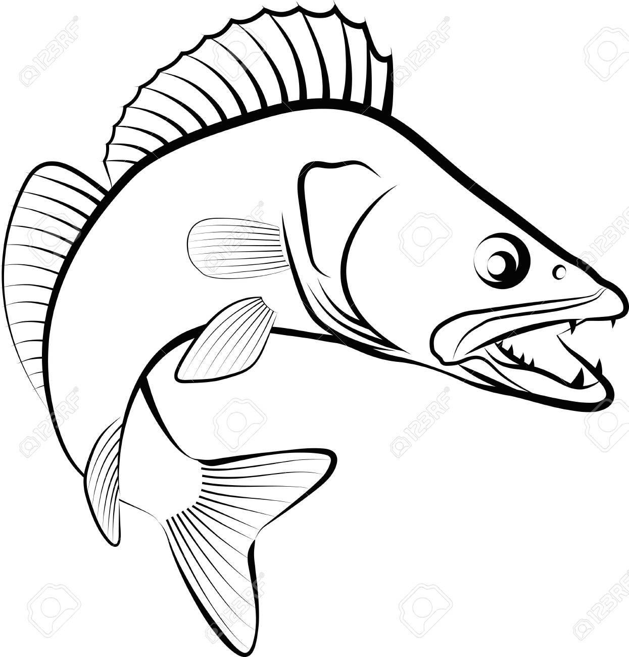 パイクの魚 - クリップ アート イラスト。 ロイヤリティフリークリップ