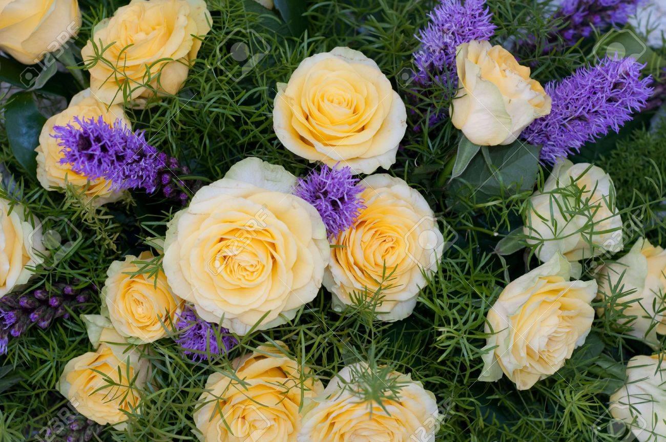 yellow roses Stock Photo - 4748580