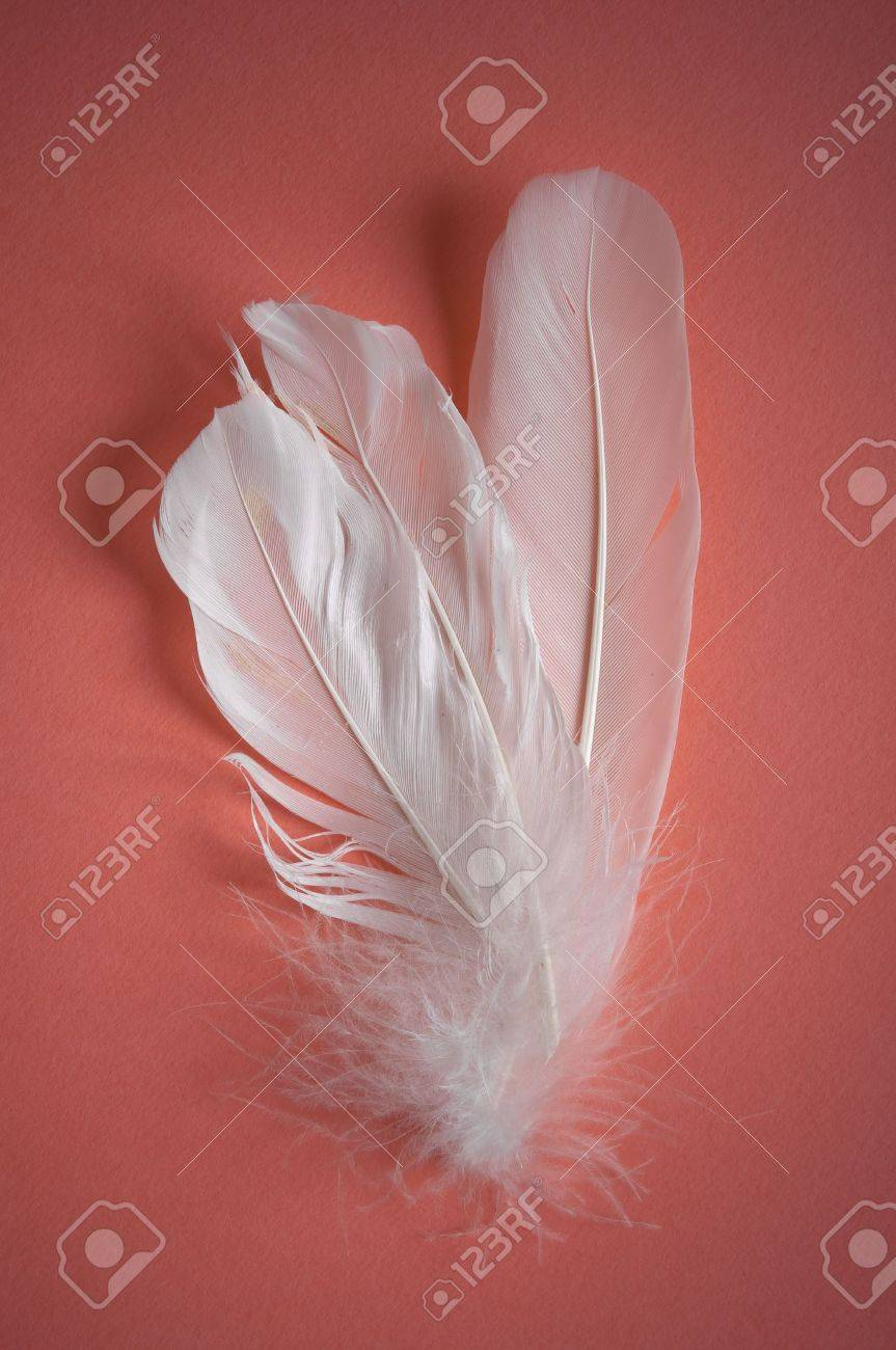 white feather on pink background Stock Photo - 6367454