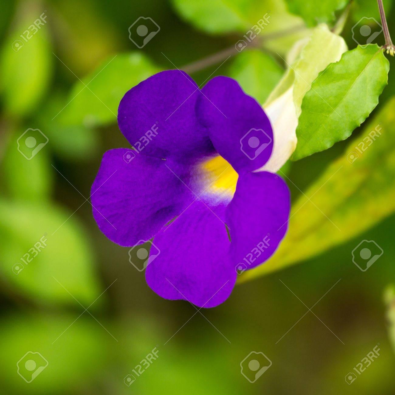 purple flowers grow beautiful house plants stock photo 21905323