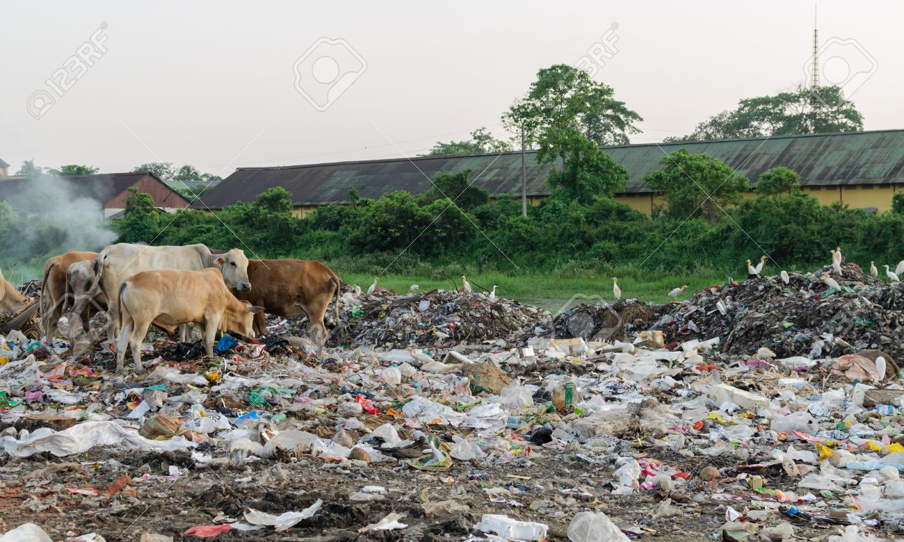fresh air will kill you lessons teach cattle and land pollution stock photo picture and royalty