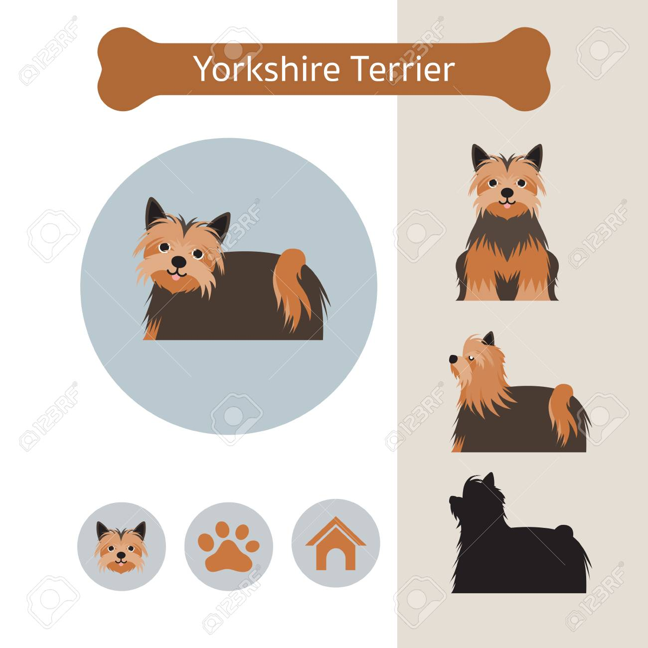 Yorkshire Terrier Dog Breed Infographic Illustration Front