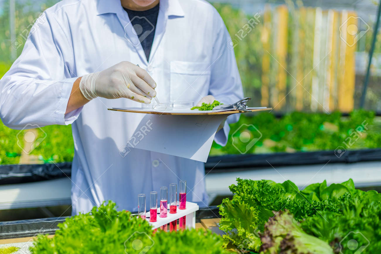 Scientists test the solution, Chemical inspection, Check freshness at organic, hydroponic farm. - 160478244