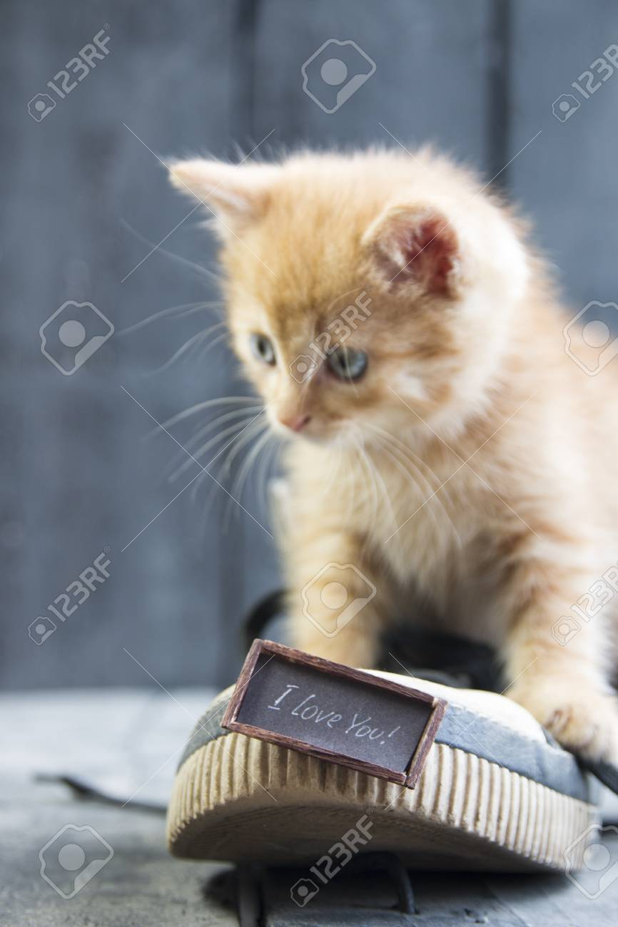 I Love You Text And Kitten Happy Valentines Day Card Stock Photo