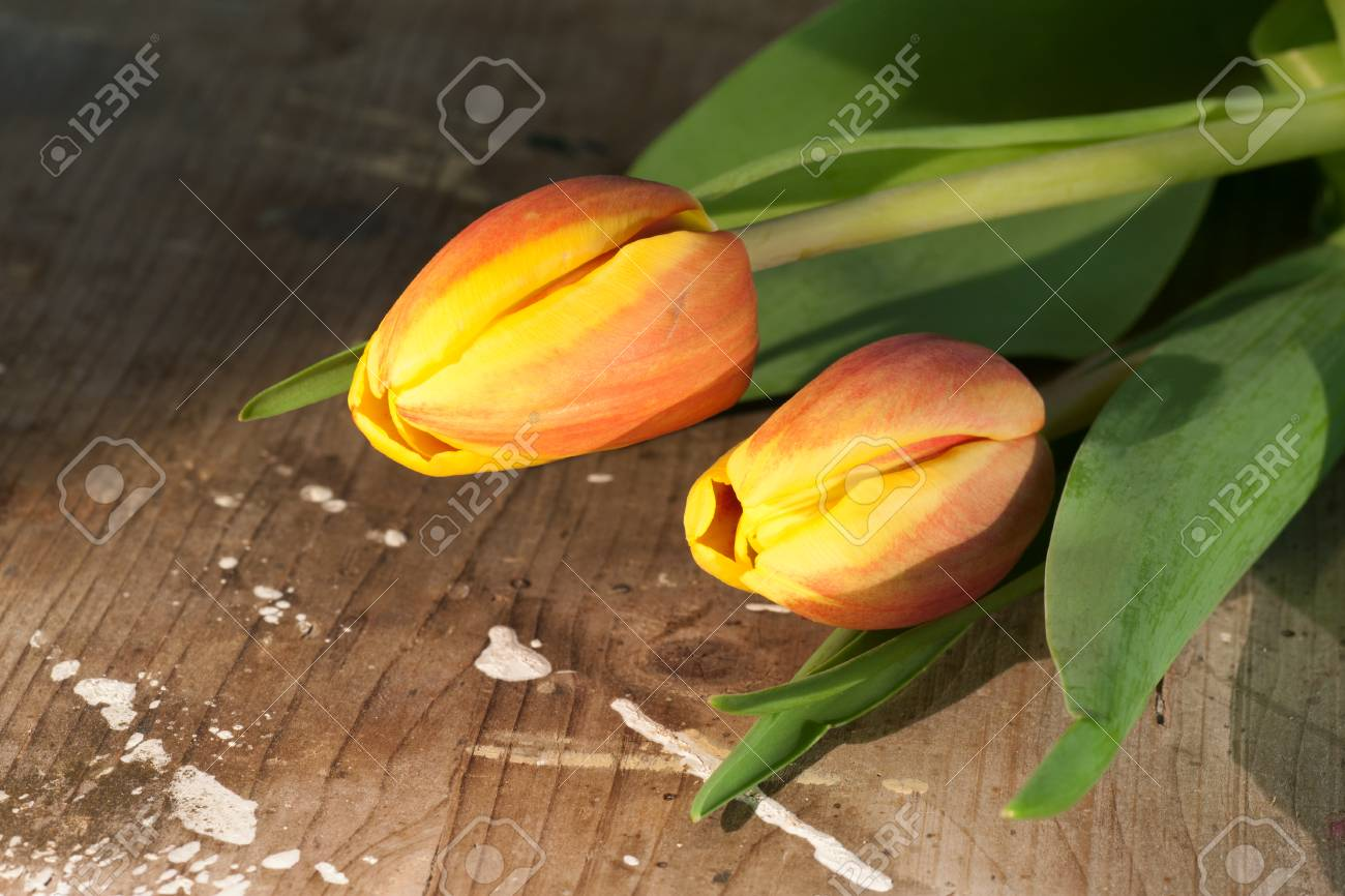 Tulips on an antique wooden background - 43358383