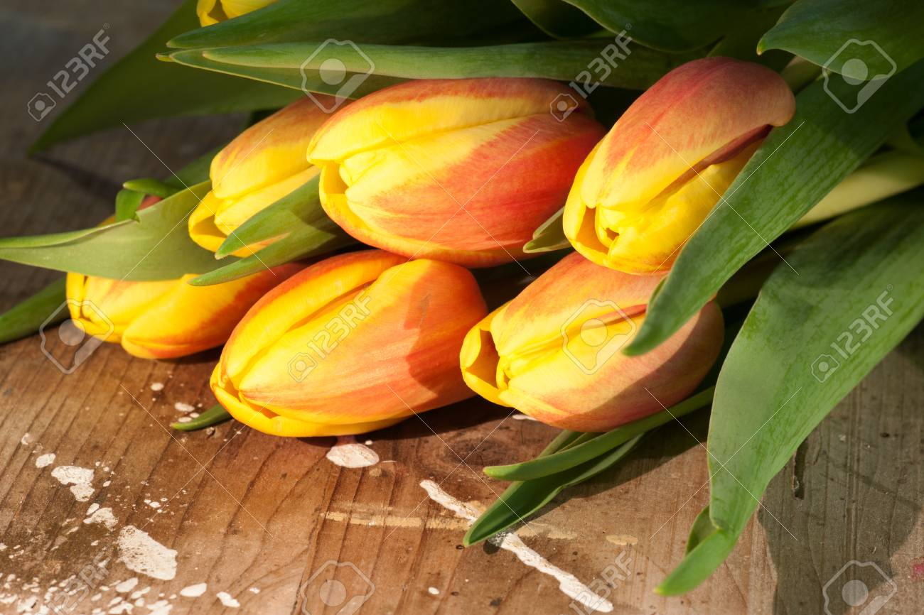Tulips on an antique wooden background - 43358386