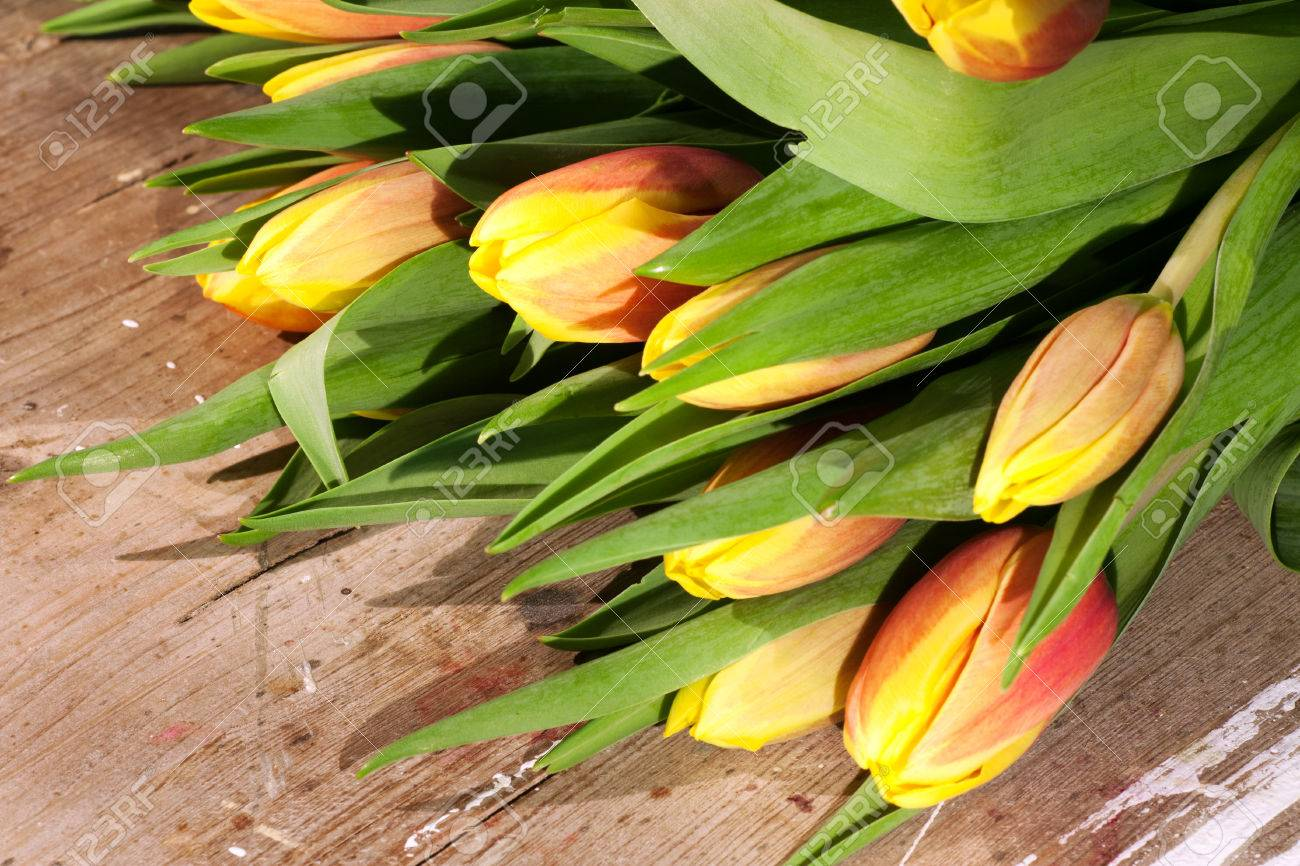 Tulips on an antique wooden background - 43358389