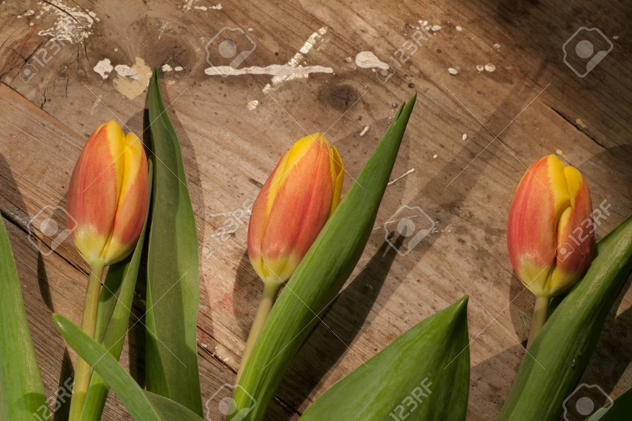 Tulips on an antique wooden background - 43358404
