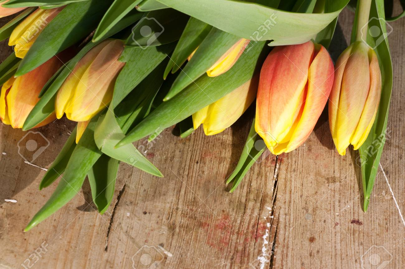 Tulips on an antique wooden background - 43359122