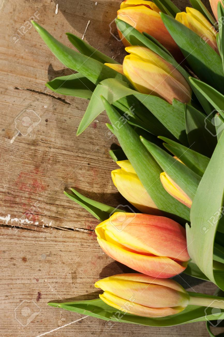 Tulips on an antique wooden background - 43359128