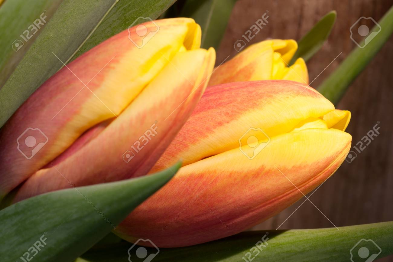 Tulips on an antique wooden background - 43359137
