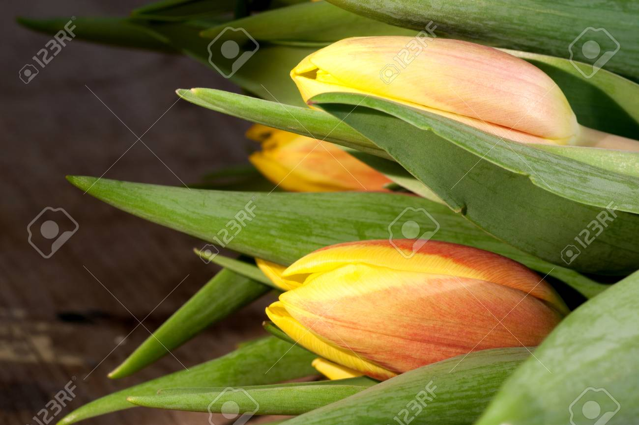 Tulips on an antique wooden background - 43359372