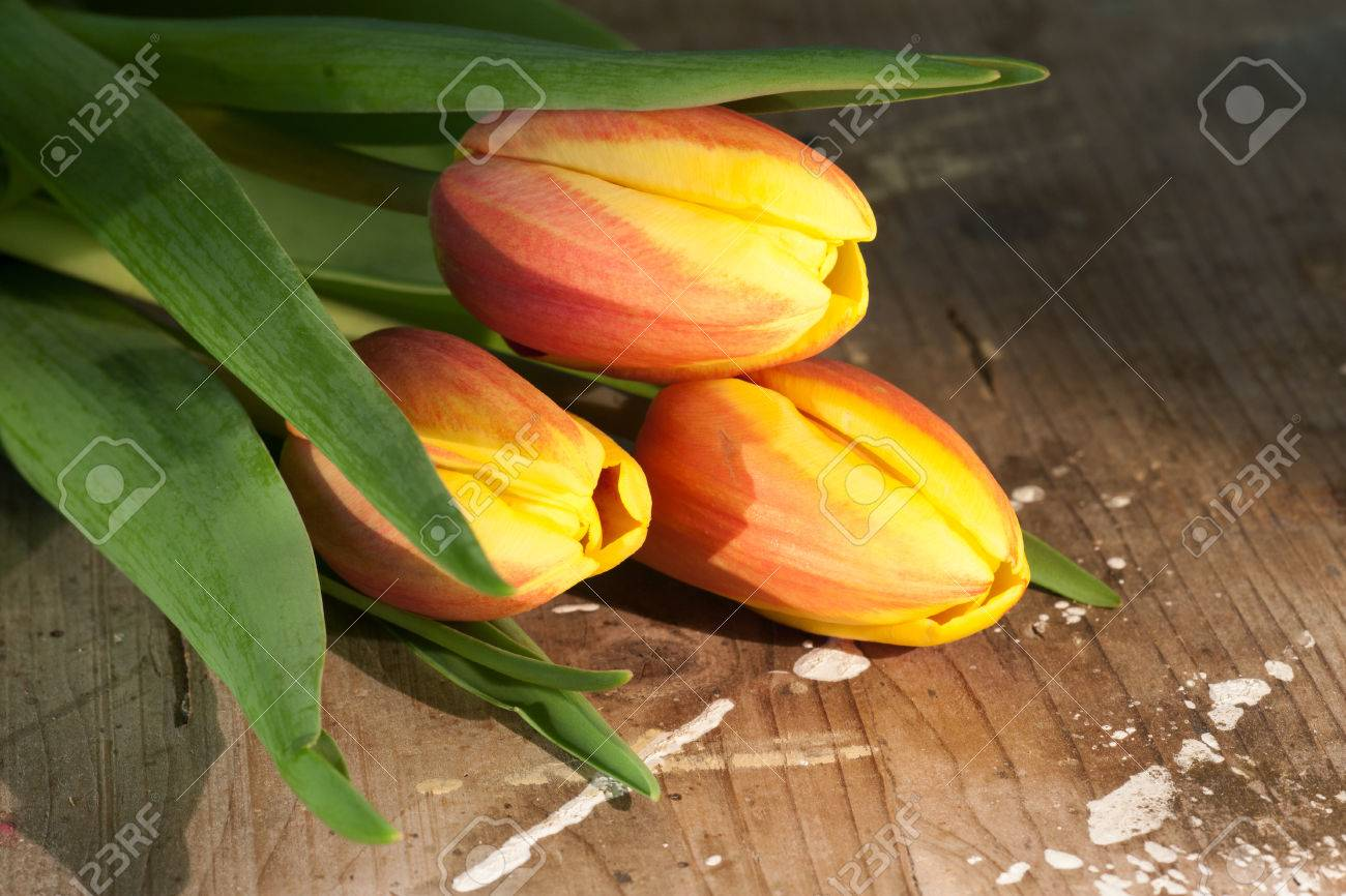 Tulips on an antique wooden background - 43359269