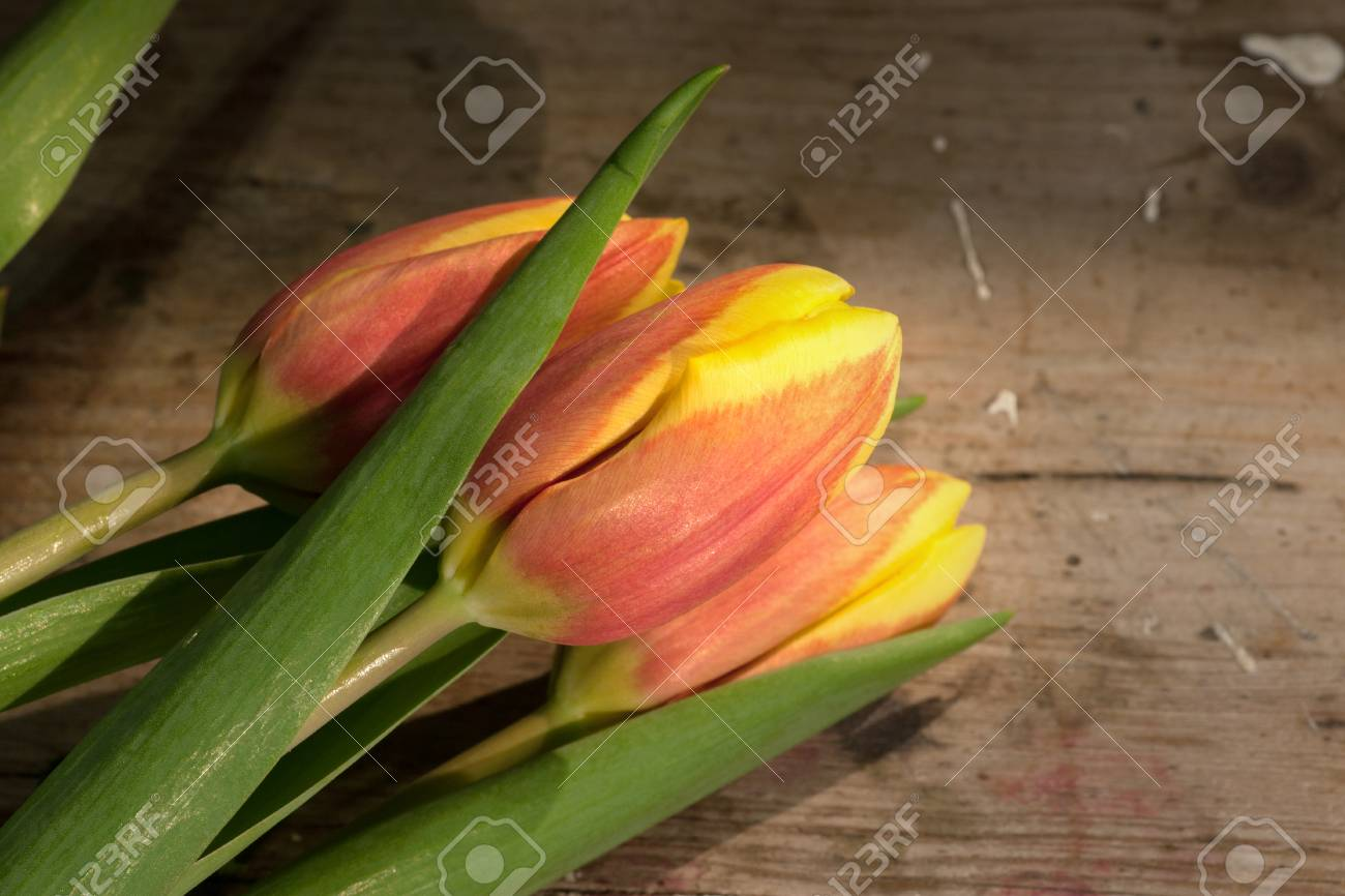 Tulips on an antique wooden background - 43359274