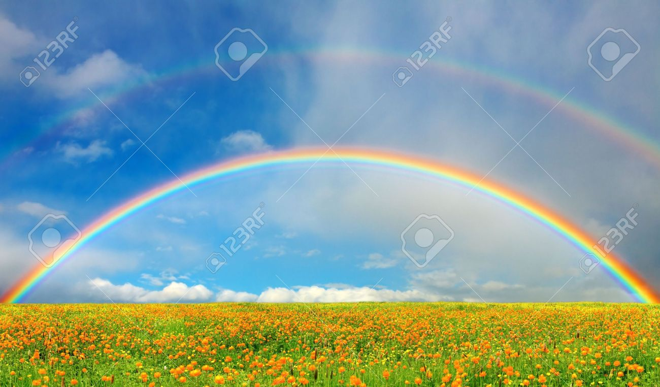 Landscape with blossoming field and rainbow - 4280907