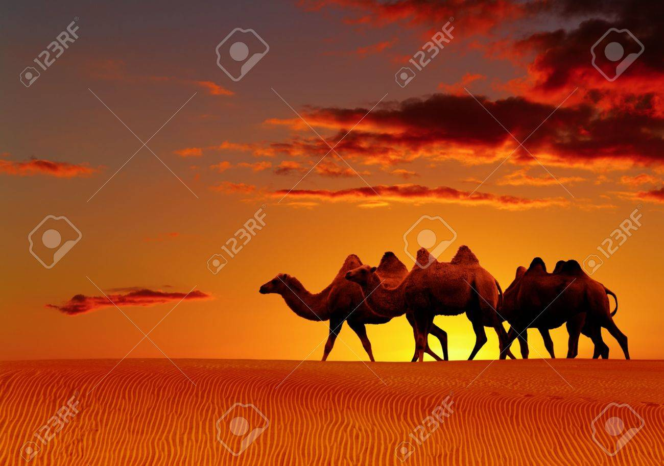 Desert landscape with walking camels at sunset Stock Photo - 4883510