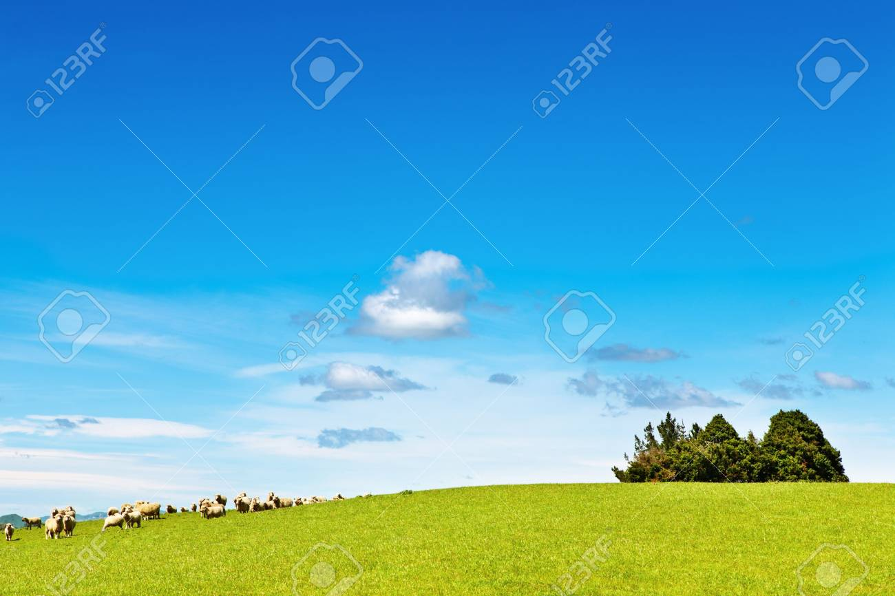 Landscape with green field and grazing sheep Stock Photo - 5227521