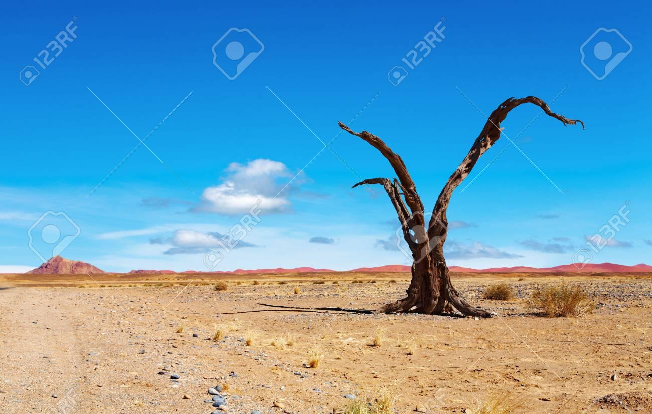 Dead tree in Namib Desert, Namibia Stock Photo - 5338419