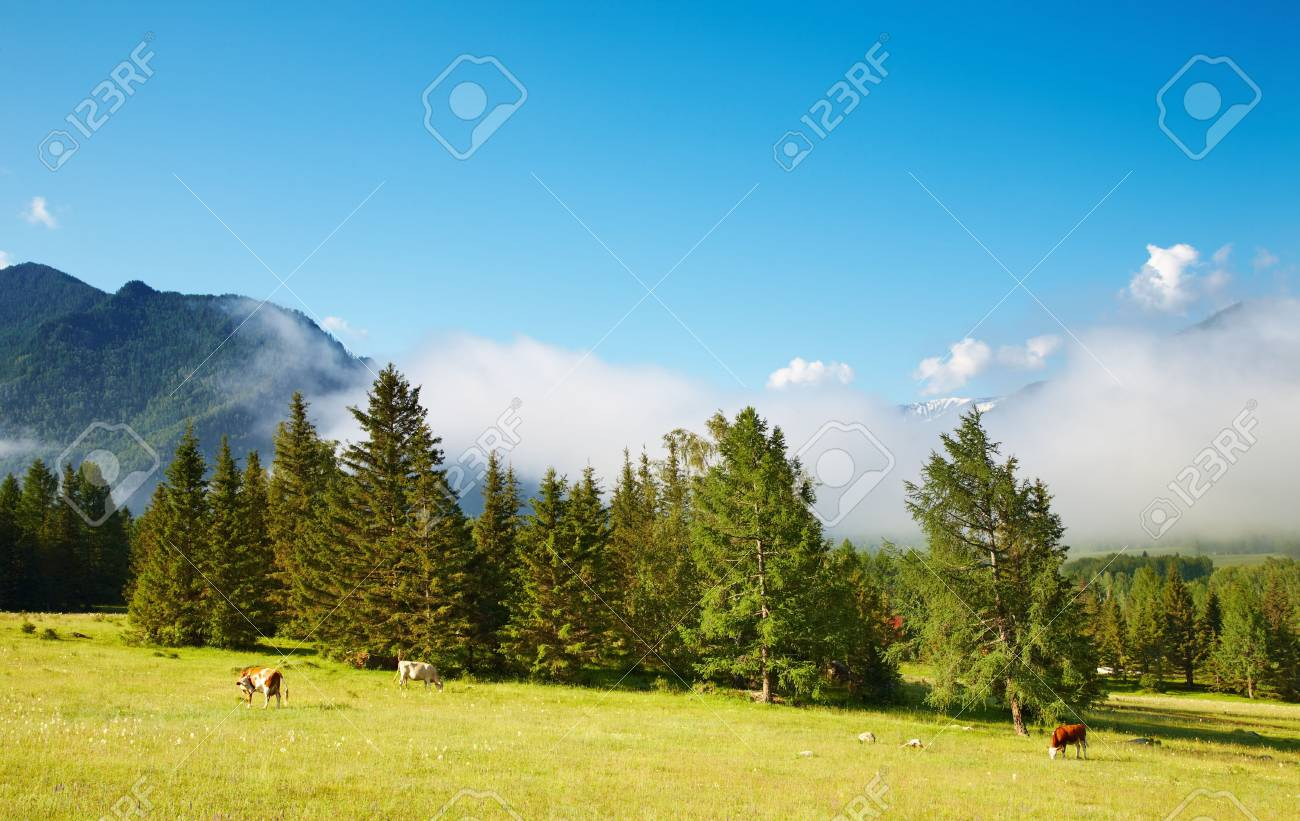 Mountain landscape with grazing cows Stock Photo - 5797361