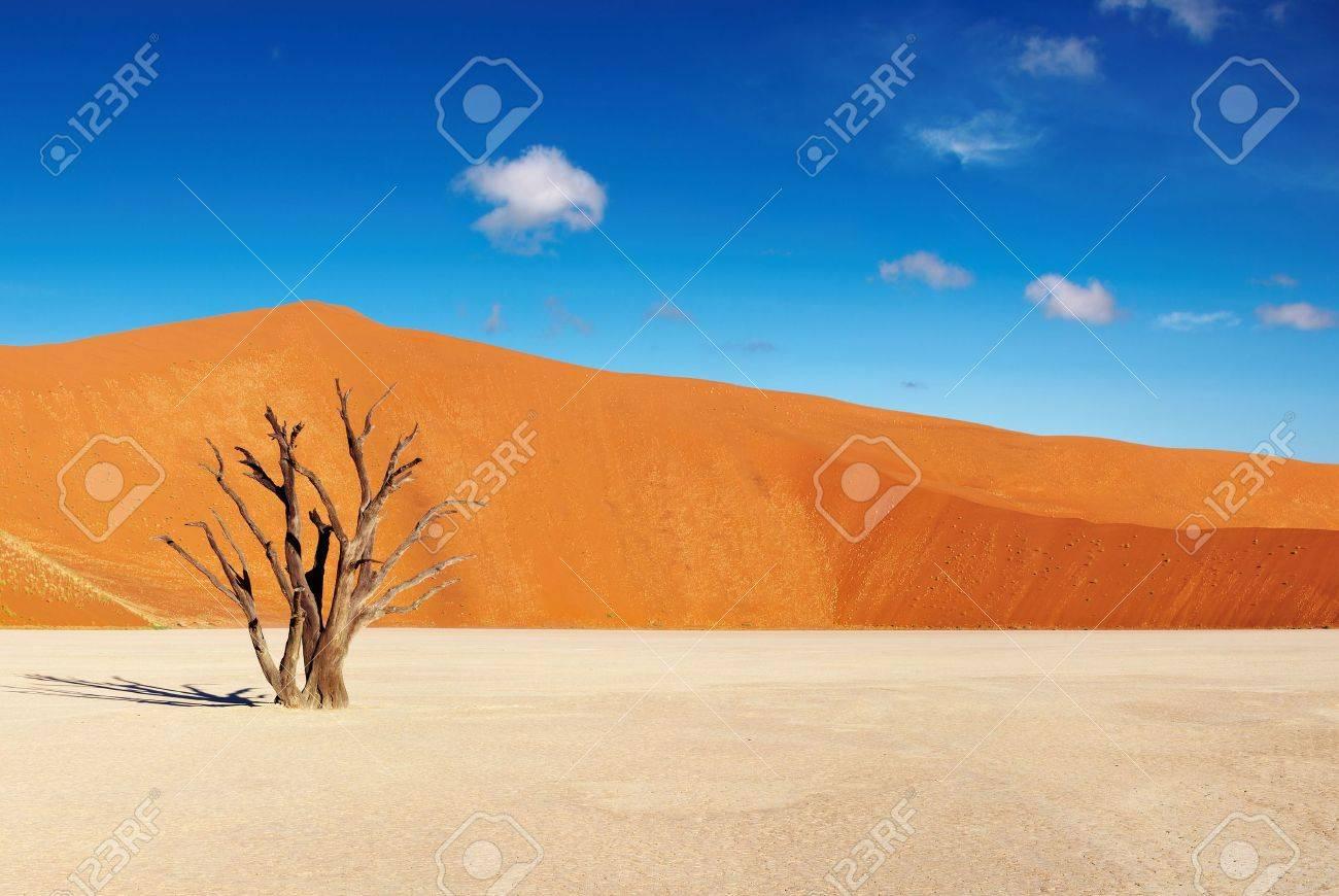 Dead tree in Dead Vlei - Sossusvlei, Namib Desert, Namibia Stock Photo - 6584647