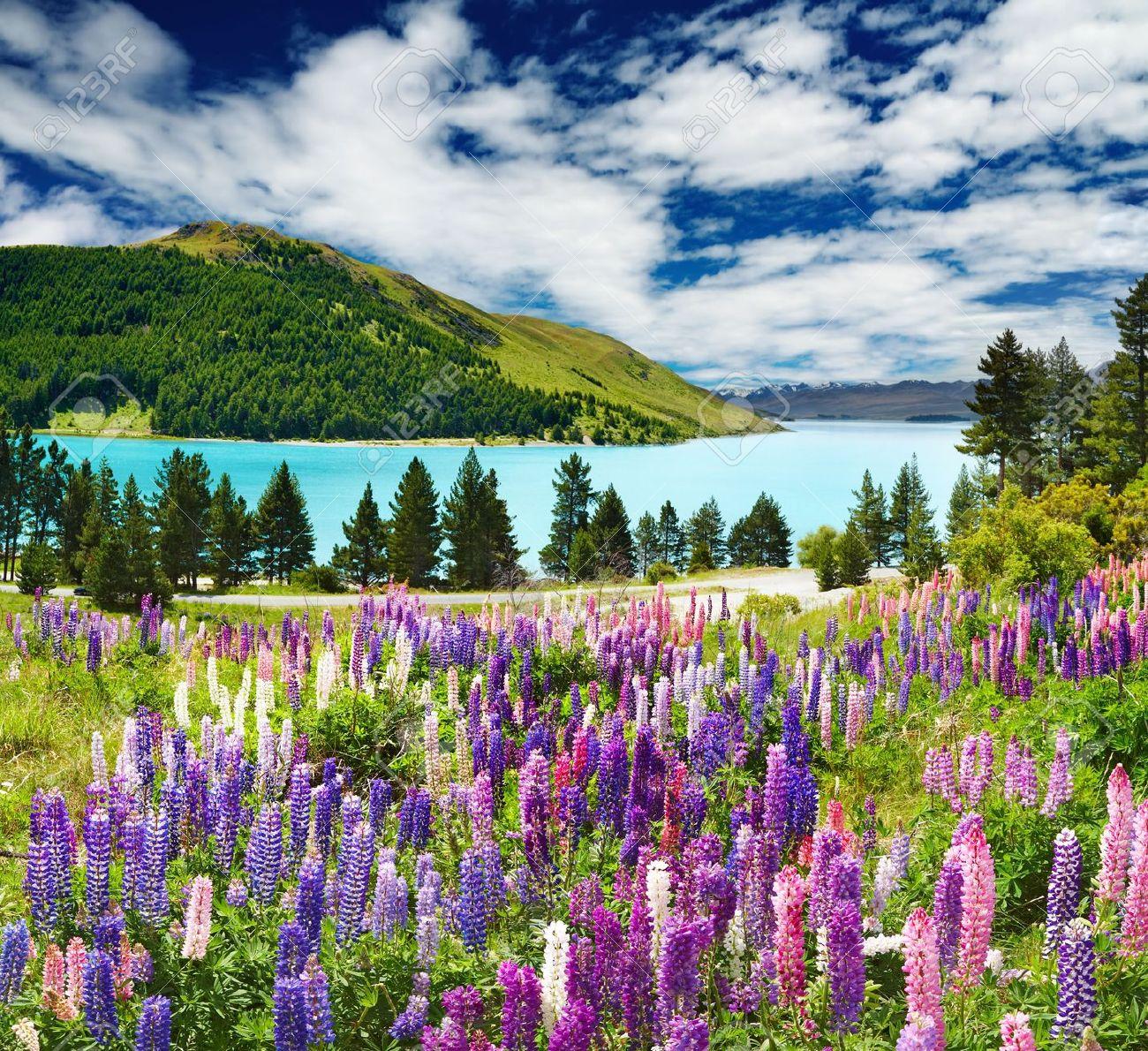 springtime landscape images u0026 stock pictures royalty free