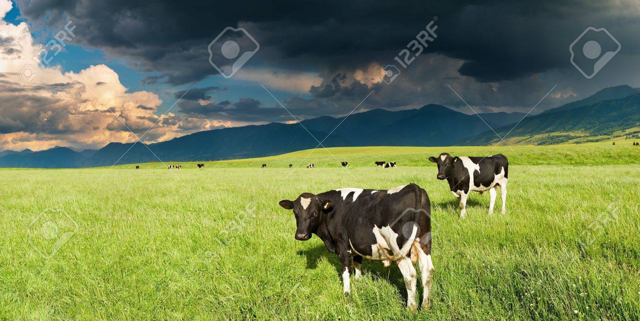 Mountain landscape with grazing cows and storm clouds Stock Photo - 8280585