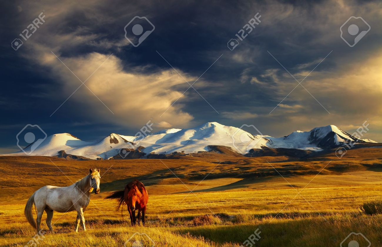 Grazing horses at sunset, plateau Ukok, the junction of Russian, Mongolian and Chinese boarders - 13401787