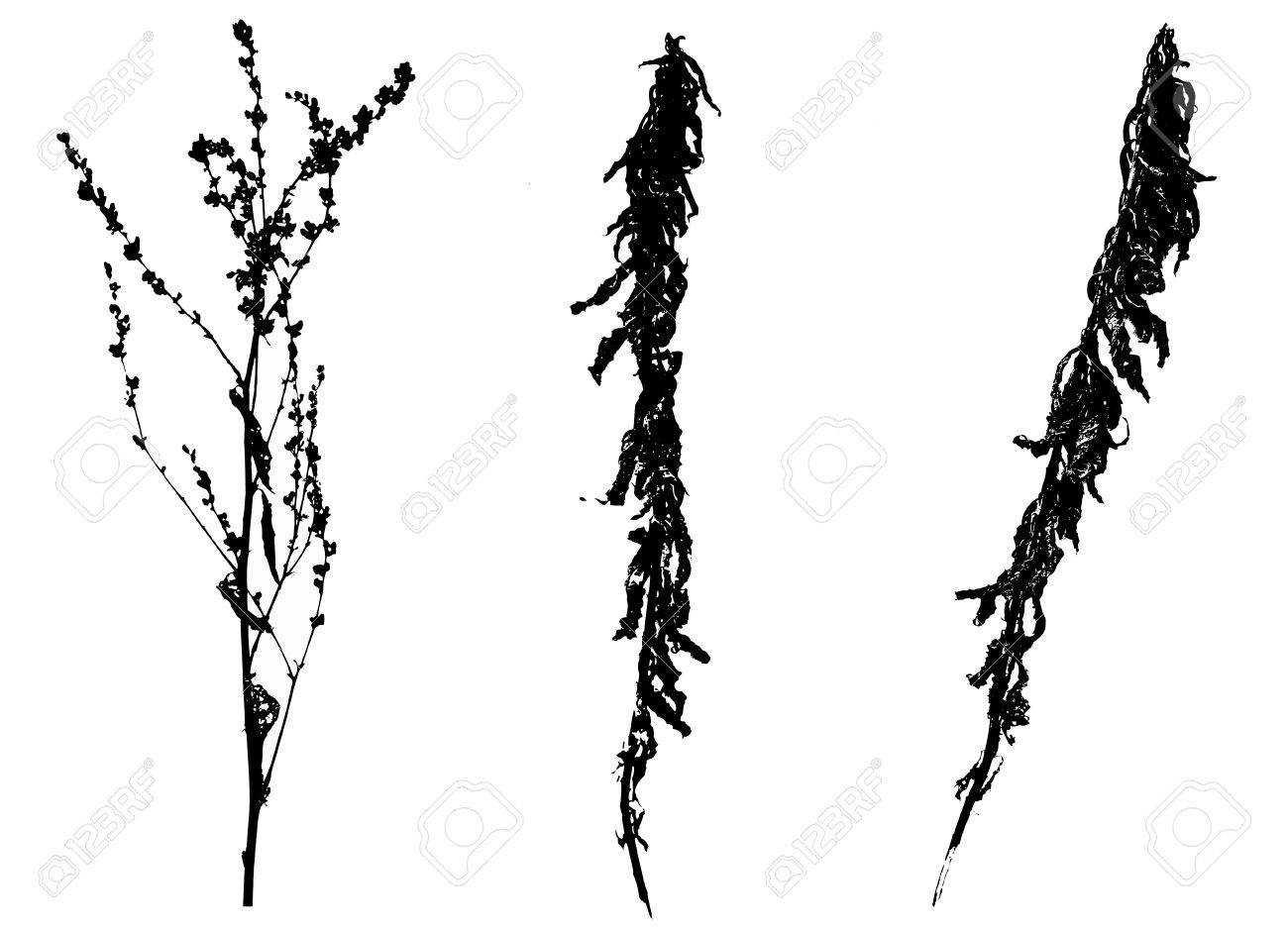 Black spring vectorized flowers on white background Stock Photo - 12988724