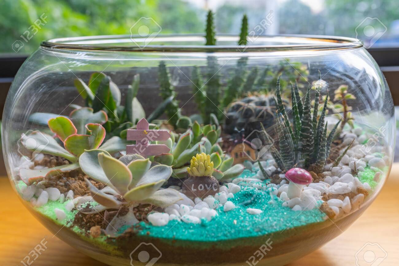 Beautiful Succulent Terrarium Tiny Indoor Garden Filled With Stock Photo Picture And Royalty Free Image Image 128863254