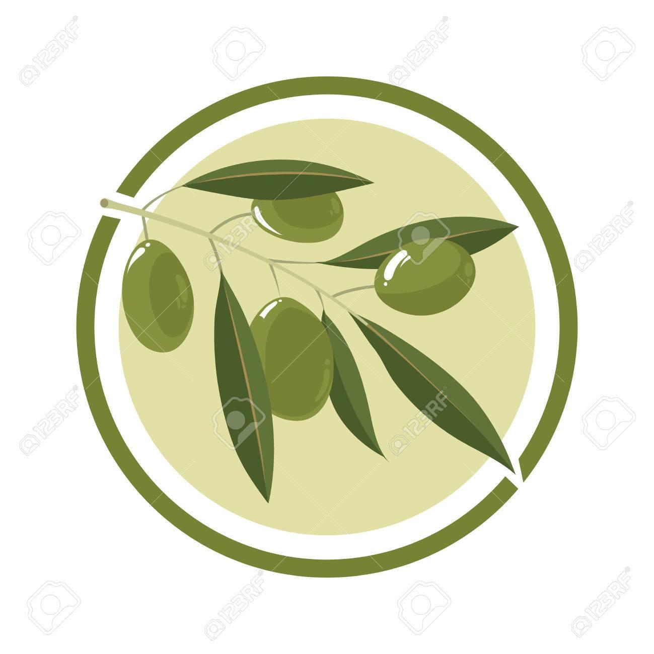 Zweig Der Olivenbaum Mit Weißen Oliven. Vektor-Illustration Im Kreis ...
