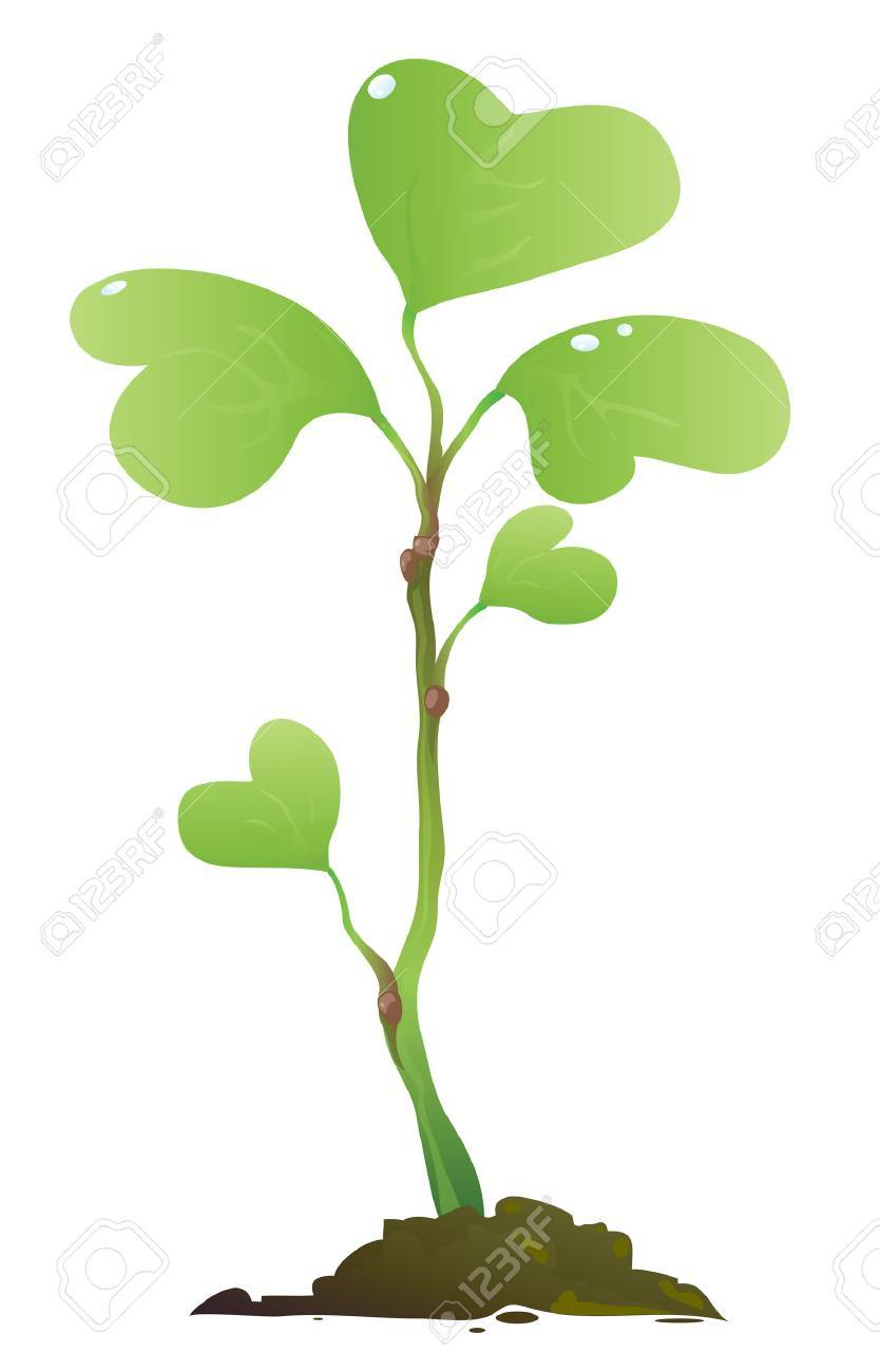 Young Plant of a Tree Stock Vector - 8655575