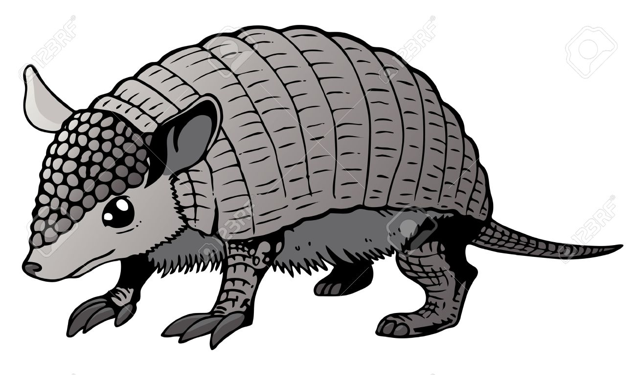 421 armadillo illustration cliparts stock vector and royalty free