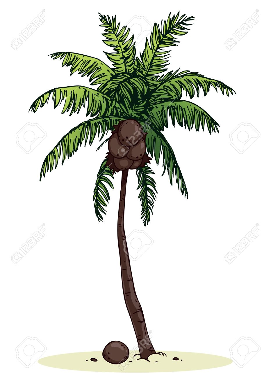 Coconut palm tree on a white background Stock Vector - 14645032
