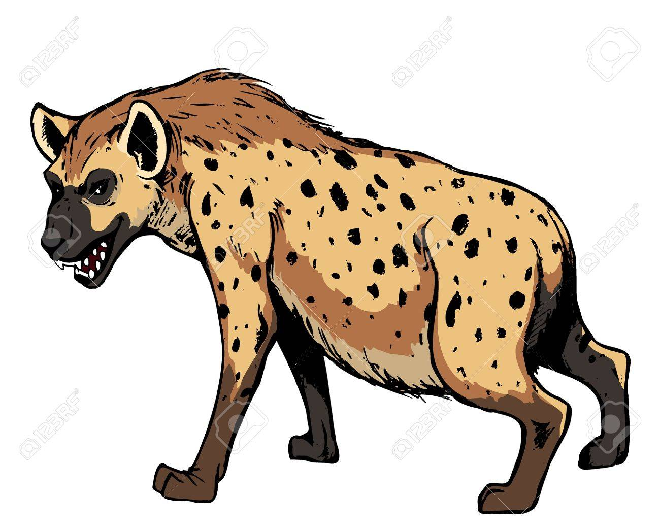 Hyena. Africa animal, isolated on white background.vector illustration Stock Vector - 17998819