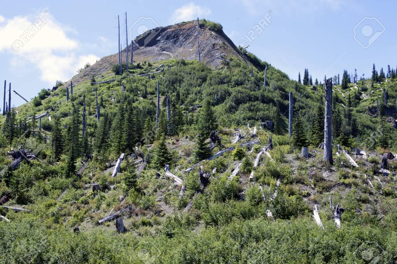 Photo taken at Mount Saint Helens National Volcanic Monument, Washington. Stock Photo - 26771207