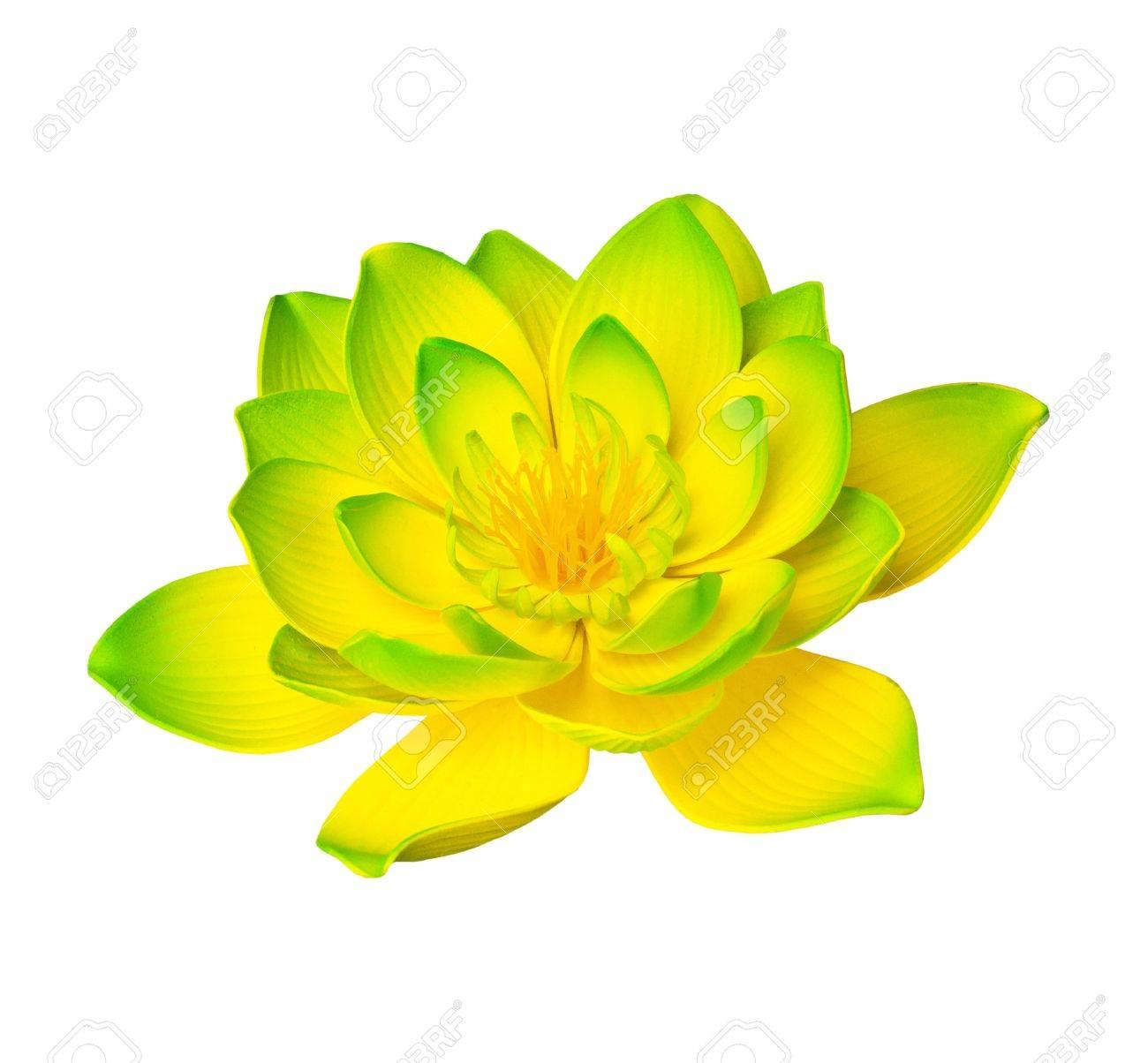 Yellow lotus - 11536904