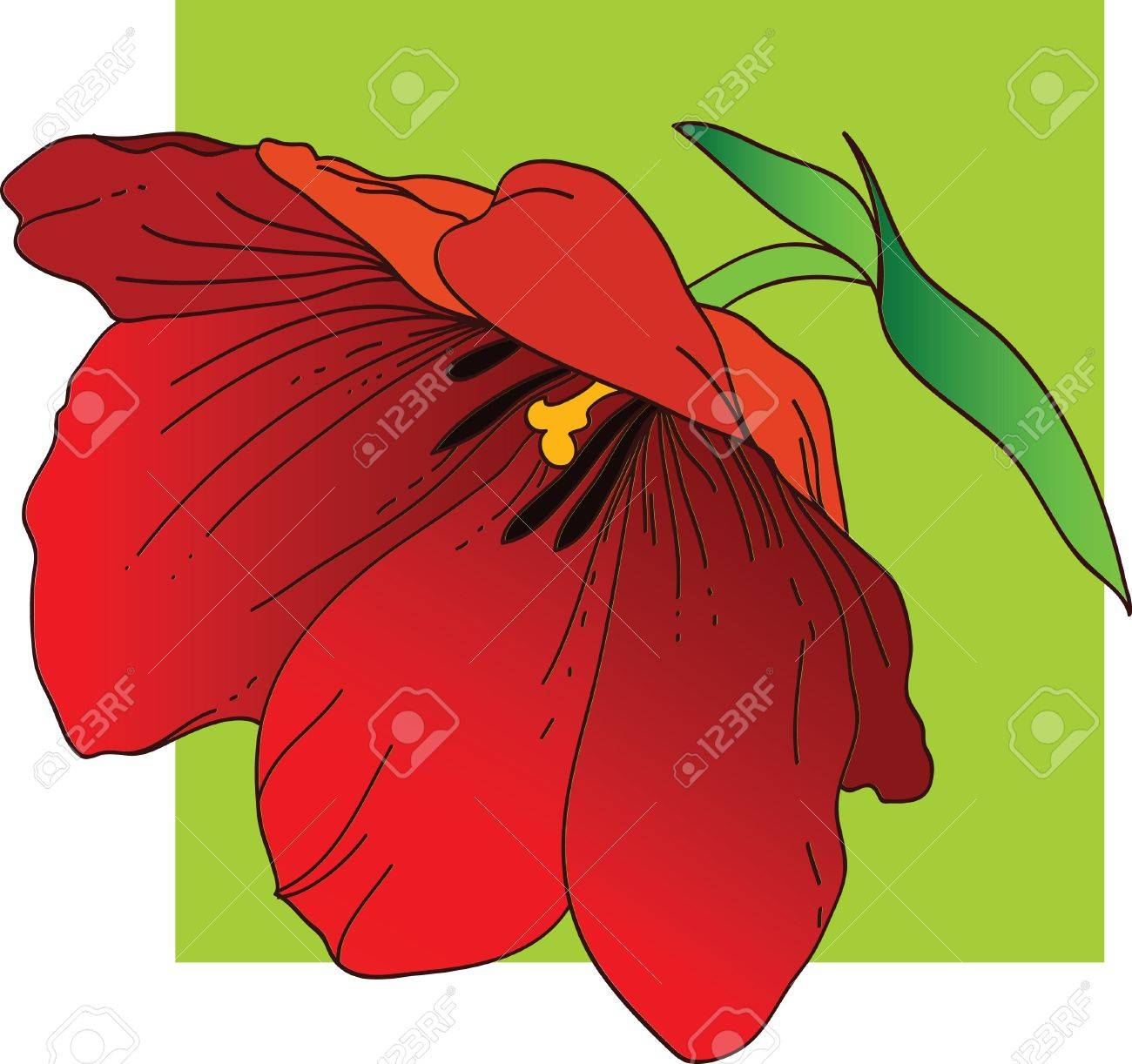 Red tulip Stock Vector - 11651079