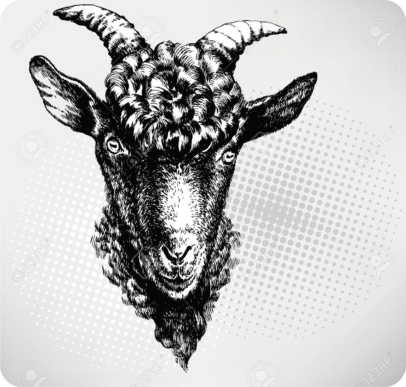 Black goat hand drawn. Vector illustration. Stock Vector - 11651233