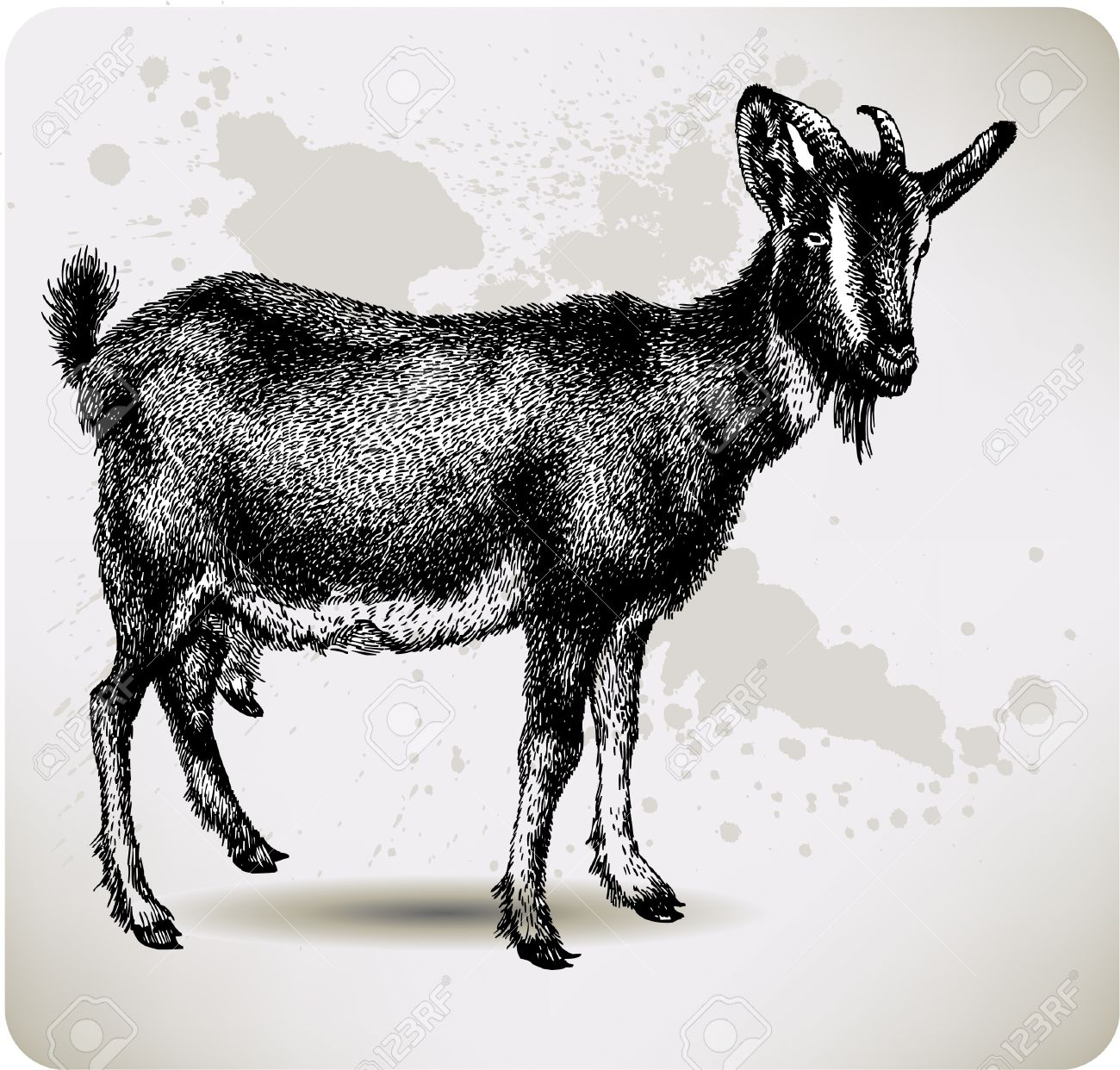 Black goat with horns, hand-drawing. Vector illustration. Stock Vector - 11651238