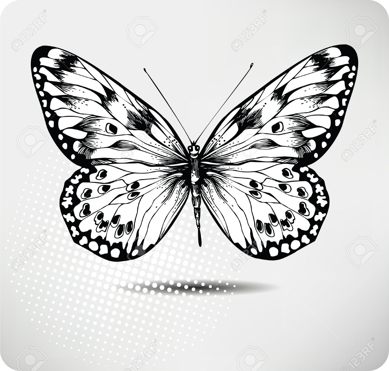 Butterfly hand drawing.Vector. Stock Vector - 11651220